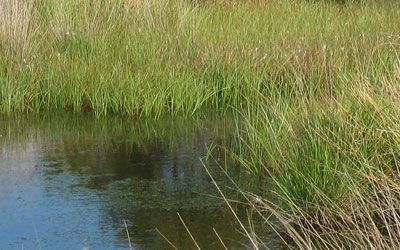 Water Conservation and Wetlands